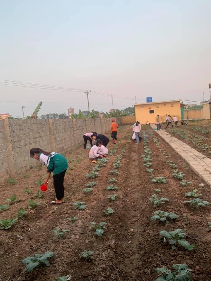 Trường TH&THCS Quỳnh Minh với mô hình Vườn rau em chăm